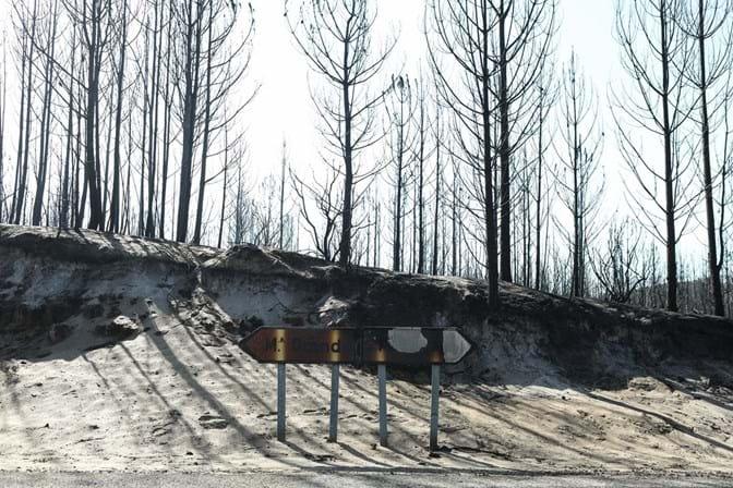 Fogo no Pinhal de Leiria foi criminoso