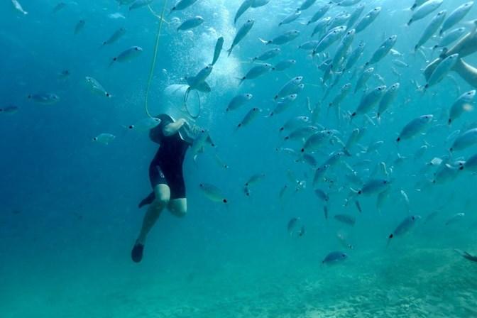 Sete coisas que não sabe sobre os oceanos